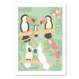 Studio Circus plakat, fugle i regnskoven
